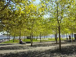 city of hoboken nj hoboken shade tree commission