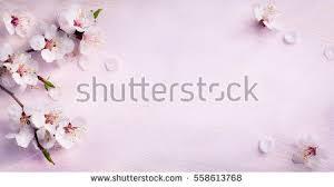 Blue Flower Backgrounds - flower background stock images royalty free images u0026 vectors