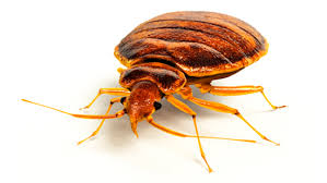 Chicago Bed Bug Experts Bed Bugs Ecolab