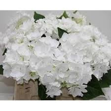 white hydrangeas white hydrangeas diy flower bunches