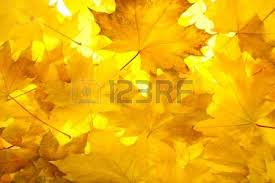 orange fall leaves border background stock photo picture