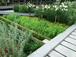 landscape design pictures a medicinal herb garden takes root on the grounds of a global