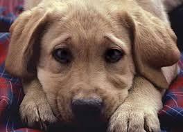 Κατώτερο των εξαγγελιών το νέο νομοσχέδιο περί ζώων...