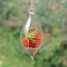 teardrop hanging glass vase air plant terrarium by dingading