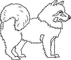 american eskimo dog tattoo american eskimo dog coloring page alaska pinterest american