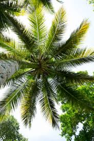 best 25 palm tree pictures ideas on pinterest palm trees