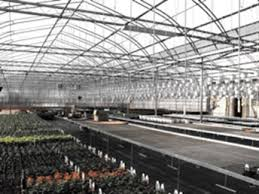 Metal Greenhouse Benches Greenhouse Benching Agroponic Industries Ltd