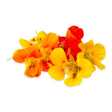 edible nasturtium flowers u0026 edible nasturtium leaves marx foods