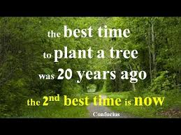 the best time to plant a tree was 20 years ago the 2nd best time is