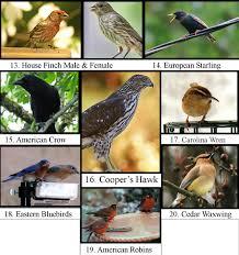wild birds unlimited most common winter birds in michigan