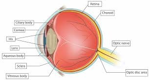 Blind Spot In Eyes Eye Conditions Provincial Resource Centre For The Visually
