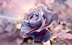 pink fantasy roses background