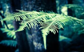 fern pictures 6832626