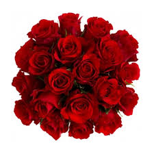 bulk roses wholesale flowers bulk flowers wedding flowers jrroses