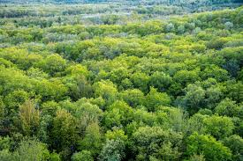 free stock photo of view of the treetops from levis mound