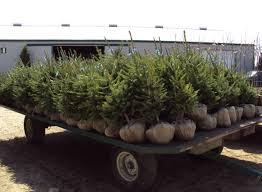 sloan nursery u0026 christmas trees