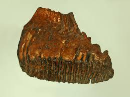 crispr scientists bringing woolly mammoths dead