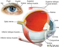 Cataract Leads To Blindness Due To Cataracts In Depth Reports St Luke U0027s Hospital