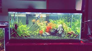 Plants For Aquascaping Stone Aquascaping With Dwarf Hairgrass Bay U2013 Freshwater Aquarium