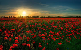 the importance of remembrance day nick riley my perspective my