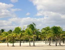 25 best things to do in miami florida the crazy tourist
