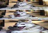 Pun Husky Meme - pun husky pun dog know your meme