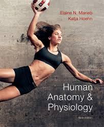 Anatomy And Physiology Tests With Answers Marieb U0026 Hoehn Human Anatomy U0026 Physiology Plus Masteringa U0026p With