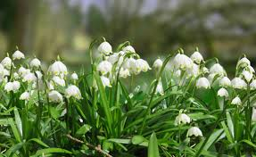 free images grass blossom white bloom green botany flora