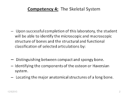 Pearson Anatomy And Physiology Lab Manual Organization Of Thethe Skeletal System Exercise 9 Page 73