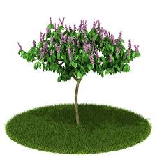 Tree With Purple Flowers 3d Model Skinny Tree With Purple Flowers Cgtrader
