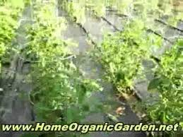 easy apartment garden easy vegetable garden growing for condo or