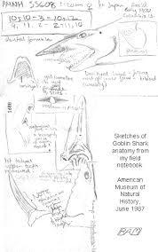 biology of the goblin shark
