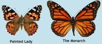 difference monarch butterflies painted