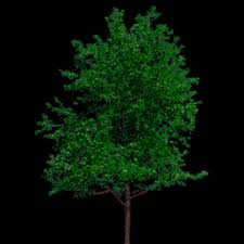 vrml 2 0 sourcebook x3d exles archive siggraph 98 course tree