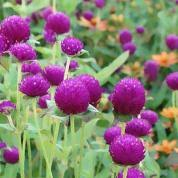 the flowers of summer at best garden flowers for color all summer this house
