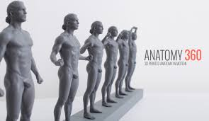 Female Body Reference For 3d Modelling 3d Printed Anatomy In Motion Technical References Pinterest