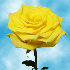 roses online cheap yellow roses for sale online florist bouquet of roses