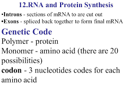 biology chapter  dna and rna unit  unit  unit  unit  with rna and protein synthesis from slideplayercom