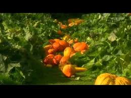 fork to fork 4 squashes youtube monty and sarah don from