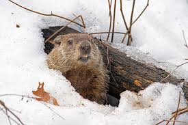 groundhog day word search puzzles for kids