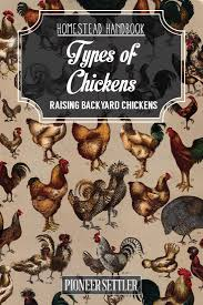 types of chickens raising backyard chickens homestead