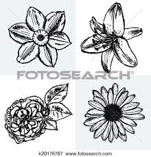 clip art of lily daisy and rose narcissus flower sketch vector
