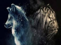 wolf and tiger wolf abstract animals tiger
