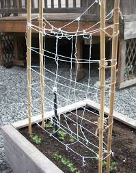 Trellis For Raspberries Frugal Gardening How To Construct A Tee Trellis For About 5