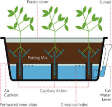self watering planters what are the benefits growgoodnz greensmart pot