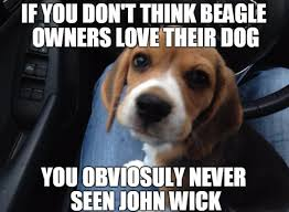 Puppy Memes - these beagle puppy memes will melt your heart