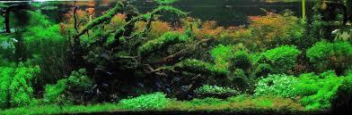 Japanese Aquascape by 11 Best Wabi Kusa Images On Pinterest Aquarium Ideas