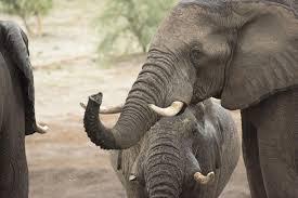 water for elephants trust