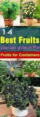 84 best garden orchard images on pinterest fruit garden plants