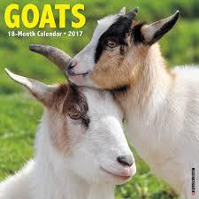 goats 2017 wall calendar willow creek press 0709786036837